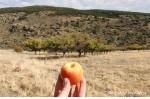 nejlepší jablko na světě/world´s best apple